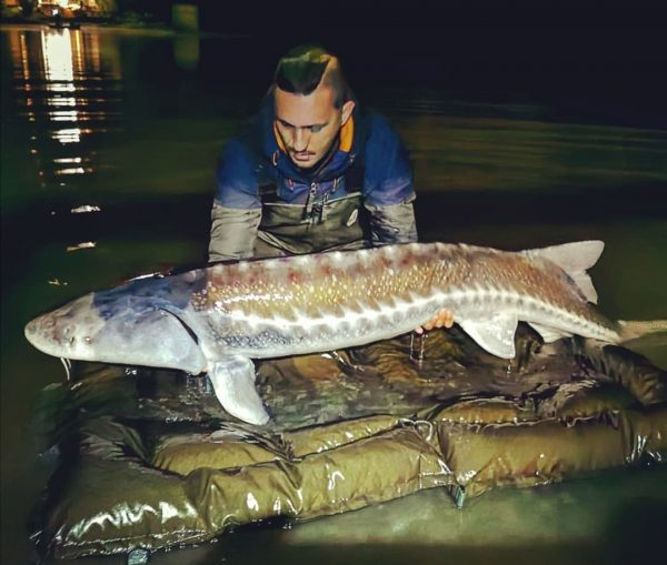 esturgeon nokill pêche de nuit